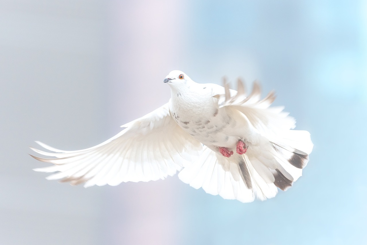 image of a dove indicating an advance goodbye from the spirit world